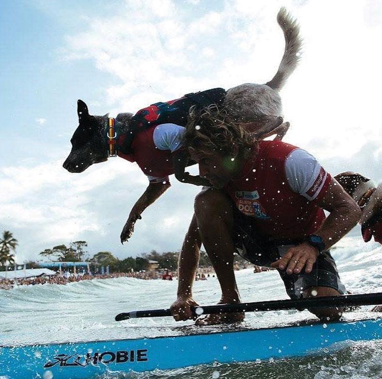 Avantages d'un gilet de sauvetage pour chien