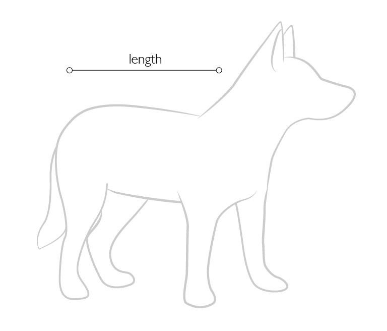 Measuring length of dog