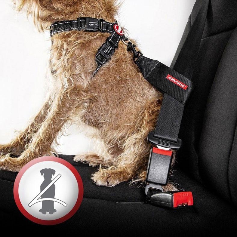 Comment installer un chien en toute sécurité dans une voiture ?