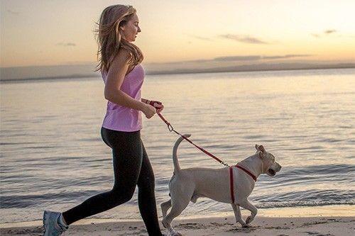 sport avec son chien pour rester en forme