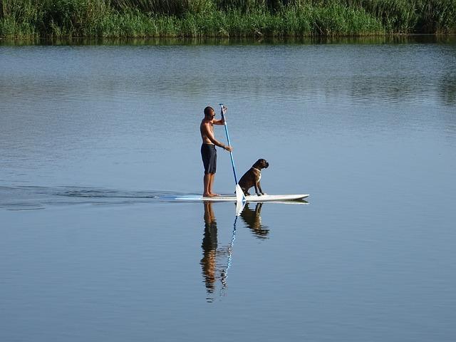 sports nautiques avec son chien