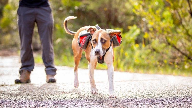 Sac à dos de randonnée pour chien